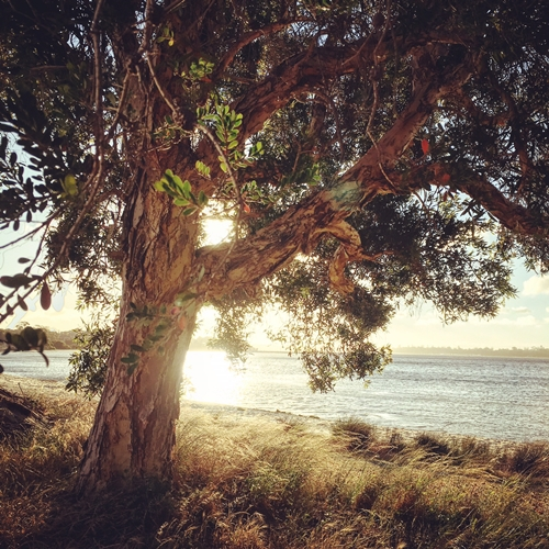 beautiful-perth-tree